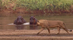 Ärkefiender: Flodhästen och lejonet