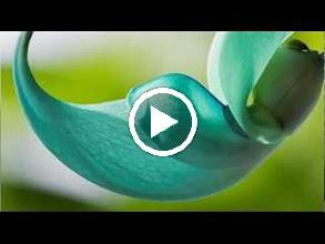 Video: A. Vivaldi  Amsterdam concerto for violin, strings   b.c. in D major (RV 220) -