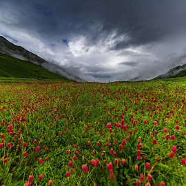 Mountain Flowers in Monsoon by Dharitri  Walia - Landscapes Mountains & Hills ( #clouds, #flowers, #landscape, #mountain, #monsoon,  )