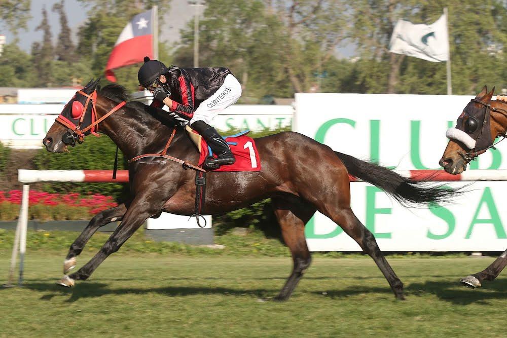 Vagamundo (Court Vision) brilló en Handicap (1200m-Pasto-CHS). - Staff ElTurf.com
