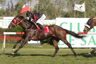 Vagamundo (Court Vision) brilló en Handicap (1200m-Pasto-CHS).