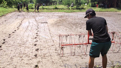 Photo: Demonstration of Roller marker on SRI field in Thailand [Photo by Supachai Pitiwut, 2013]