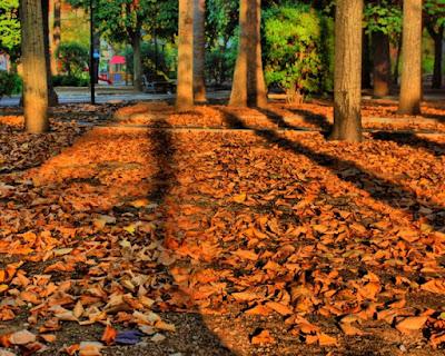 I colori dell'autunno di lalaamleto