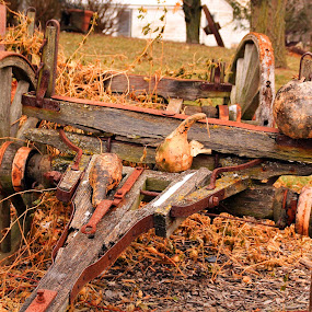 Withered by Marsha Biller - Artistic Objects Other Objects ( cart broken old dry wood,  )