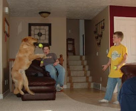 Photo: Costner jumping for the ball. He is a service dog for Autism.
