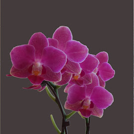 by Steve Tharp - Flowers Flower Arangements
