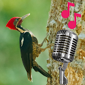 woodpecker sounds at night icon