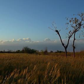 by Athar Saroia - Landscapes Prairies, Meadows & Fields