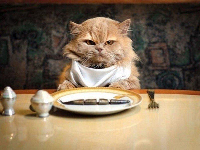 Лакомства для домашних котов