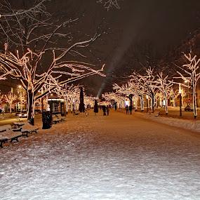 by Davor Kapetan - City,  Street & Park  Street Scenes ( night, lights )