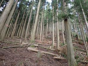 上部まで植林