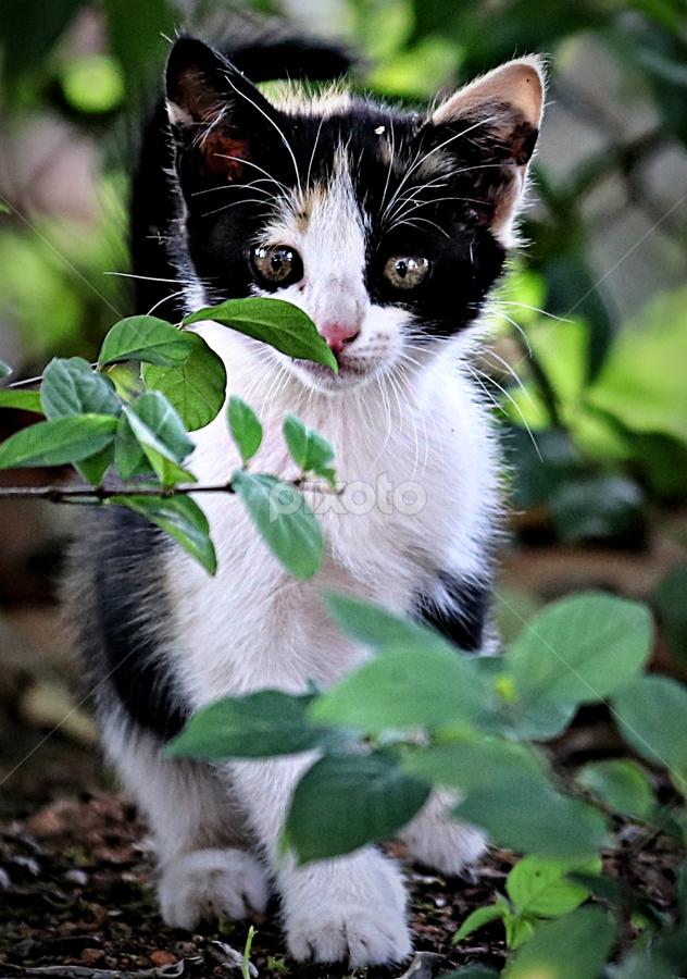 I am watching you! by Pieter J de Villiers - Animals - Cats Kittens