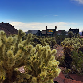 Nelson Ghost Town, NV by Stephen Terakami - Novices Only Flowers & Plants ( las vegas, cactus cholla, nevada, ghost town, henderson, nelson )