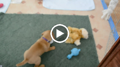 Video: Another playful mood