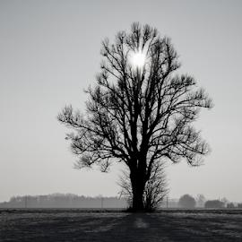 by Dragica Šilak - Black & White Landscapes