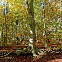 Un tappeto di foglie di