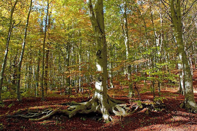 Un tappeto di foglie di Naldina Fornasari