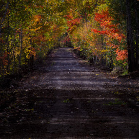 Subdued Fall archway by Michael Haagen - Transportation Roads ( archway, fall, color, subdued, leaf,  )