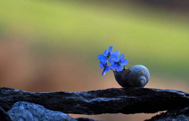 Colori di primavera di gigidueelle