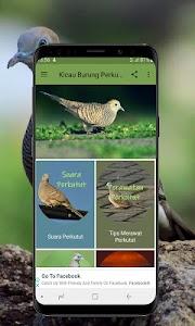 Kicau Burung Perkutut Offline 1.1