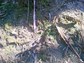 Photo: Oak seedling.