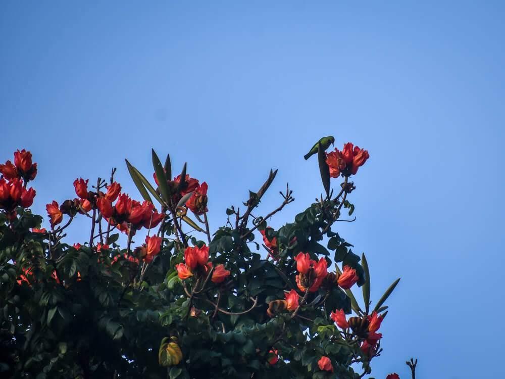 little+green+bee+eater+dandeli+birds+african+tulip+dandeli.jpg