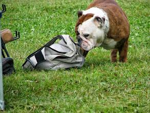 Photo: ... aga hantlist huvitavamaks osutus kellegi kott!