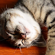 Download sleeping cat wallpaper - kitten video wallpaper For PC Windows and Mac