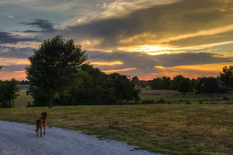 Photo: Murphy My friend is coming to play. I hear him.  Sunset - July 15, 2012 just outside Joplin, MO  #365project curated by +Susan Porter+Simon Kitcher+Patricia dos Santos Paton+Vesna Krnjic  #landscapephotography curated by +Margaret Tompkins+Carra Riley+paul t beard+Ke Zeng+David Heath Williams