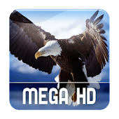 Mega Video HD