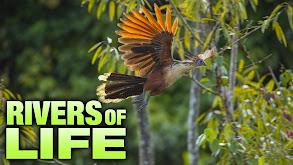 Rivers of Life thumbnail