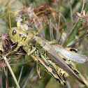 Differential Grasshoppers