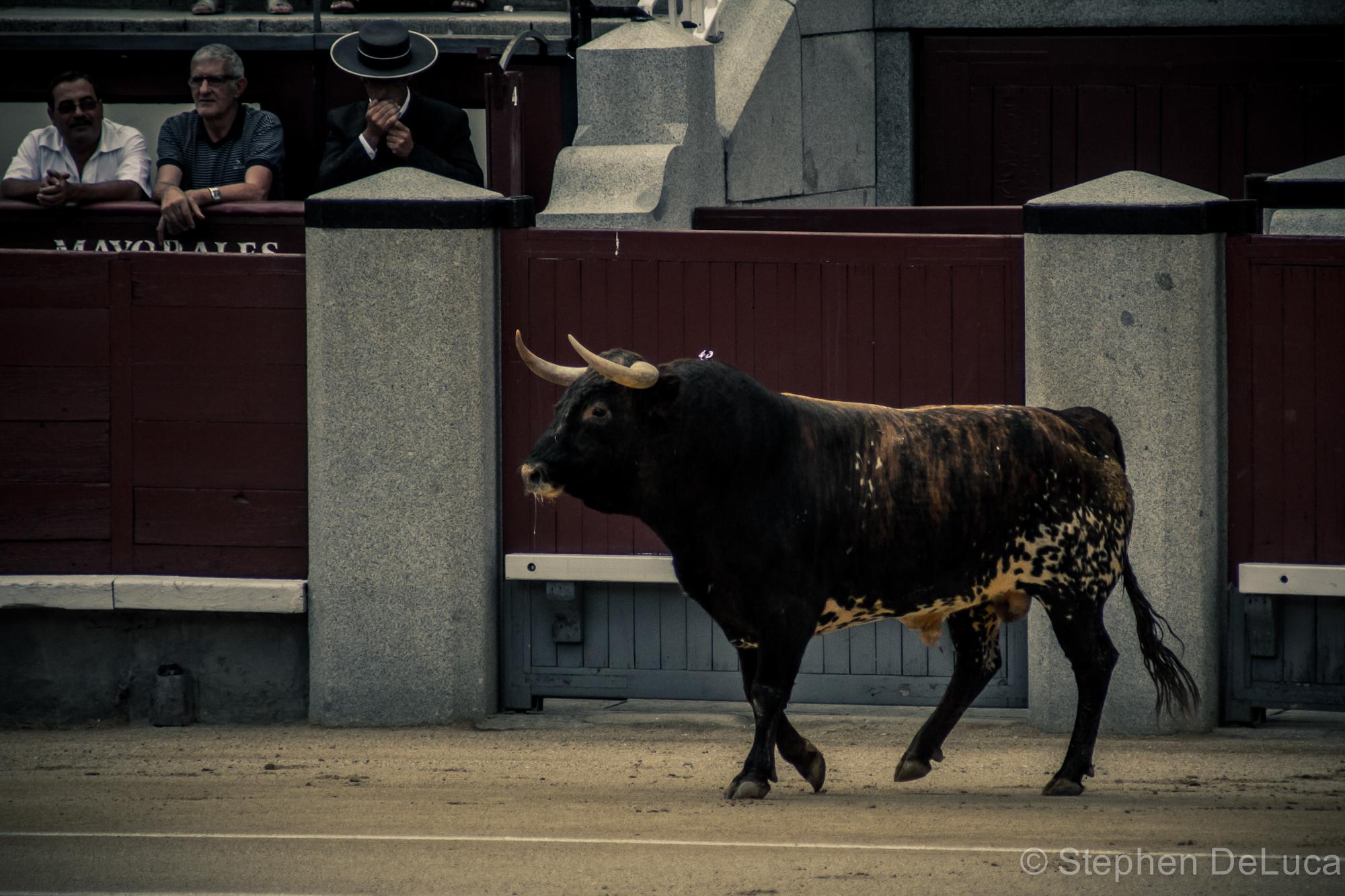 Photo: Bullfight-3
