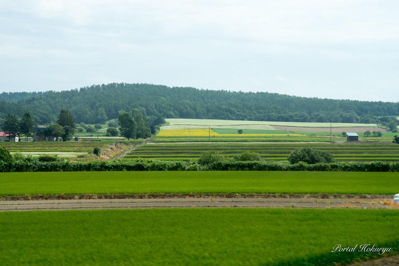 北竜町美葉牛地区の緑豊かな風景