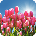 Tulip Field Live Wallpaper icon