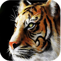 Big Cats Live Wallpapers icon