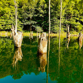 Deadwood by Santford Overton - Landscapes Waterscapes ( landscapes, waterscapes, reflections, light, trees, lake, water, photography,  )