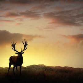 Stag in the Golden Glow by Jennifer Woodward - Digital Art Animals ( deer, deer wildlife, sunrise, pink, nature, dusk, gold, stag, sunset, silhouette, golden, weather, dawn, animals, landscape,  )