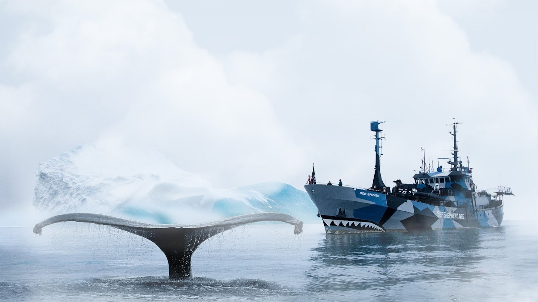 Watch Whale Wars live