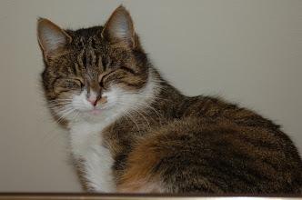 Photo: No nie wygląda jak Garfield?