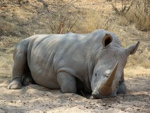 Photo: #012-Rhinocéros blanc à Epako