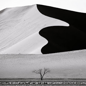 The Last Stand... by Dana Allen - Landscapes Deserts