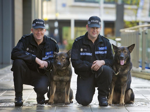 Police Dogs Wallpapers in HD