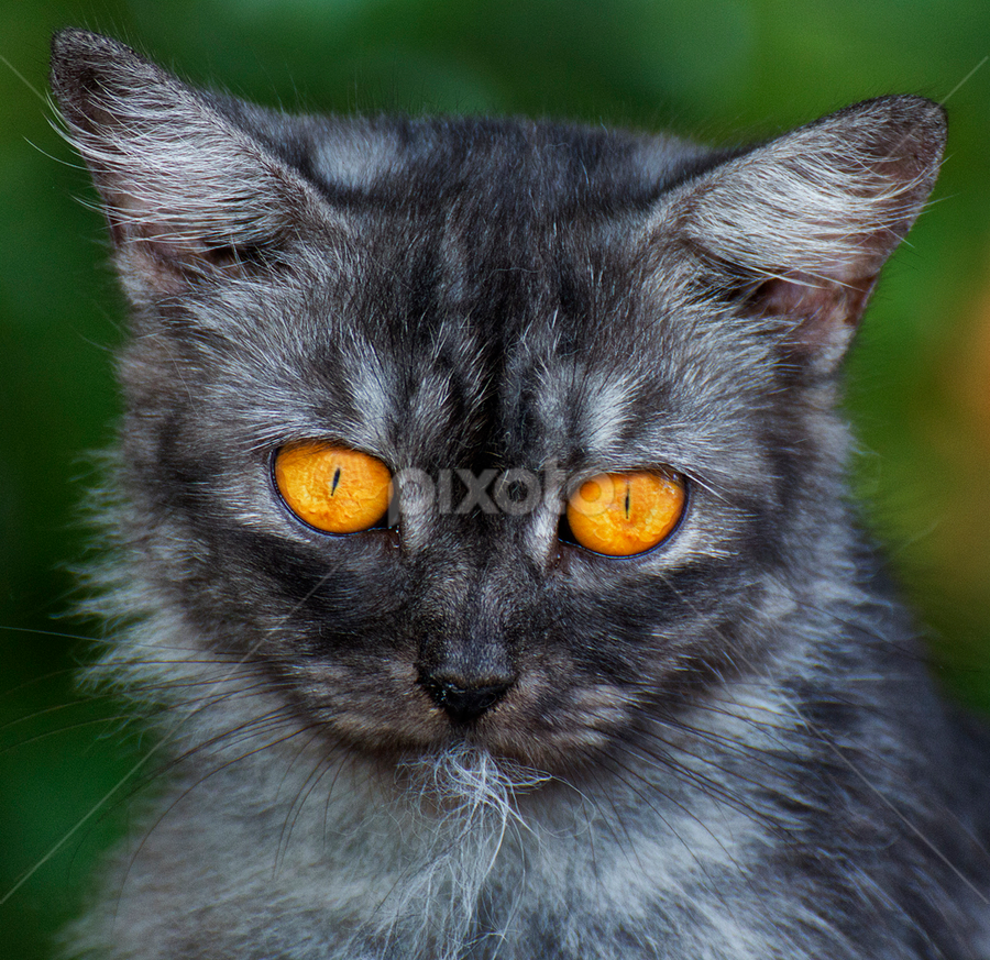 by Charliemagne Unggay - Animals - Cats Portraits