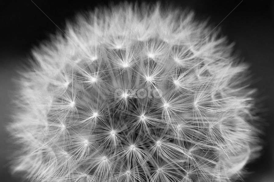 Sphere by Rory McDonald - Nature Up Close Flowers - 2011-2013
