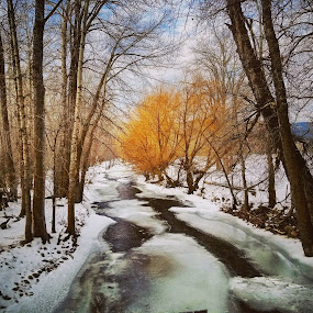 Creek by D.j. Nichols - Instagram & Mobile Android ( creek )