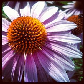 Flower power by Mirna Abaffy - Instagram & Mobile Instagram ( circle, pwc79 )