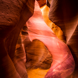 The Elephant in the Room by Judy Rosanno - Landscapes Caves & Formations ( page az, lower antelope canyon,  )