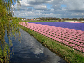 Photo: #010-Les champs de jacinthes dans les environs de Lisse.