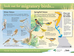 This image shows an interpretive panel with text about migratory birds.